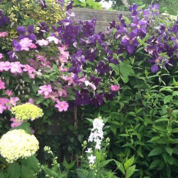 Groei en Bloei tuin 1