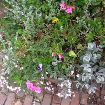 Groei en Bloei tuin 2