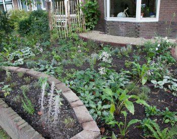 Klimaatvriendelijke voorbeeldtuin met wadi. Ontwerp: De Groene Verdieping / Elke Blänsdorf