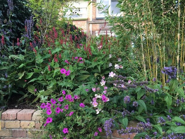 zomerbloeiers zoals dropplant, persicaria, herfstanemoon en geranium en bamboe op de voorgrond