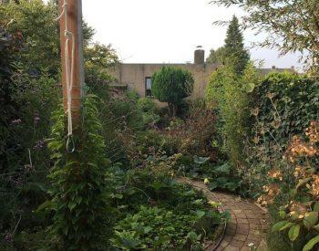 ontplofte tuin na vakantie met uit de hand gelopen pompoenen en ijzerhard
